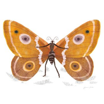 vlinder-700×700